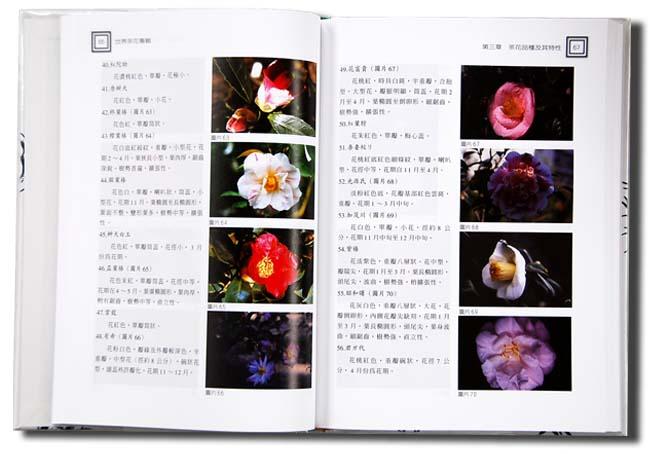 茶花-盆栽市場 - 台灣盆栽世界 - Taiwan Bonsai World - 台灣盆景圖